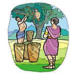 olive tree harvesting